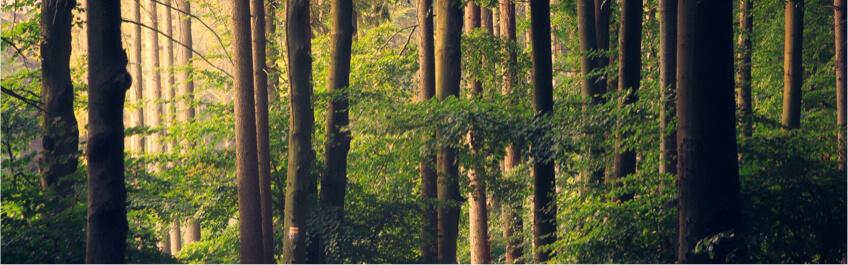 Une forêt avec le logo de la marque